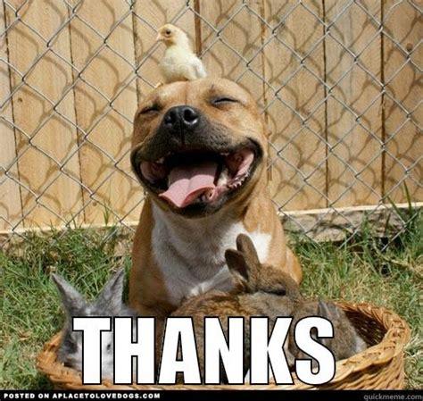 Thank You Meme - thank you meme puppy the random vibez