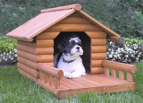 house training a dog dog house training dog training