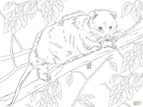 possum in a tree coloring pages coloring pages