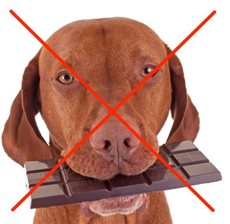 chocolate bad for dogs is chocolate your poison of choice don t make it your pet s companion animal
