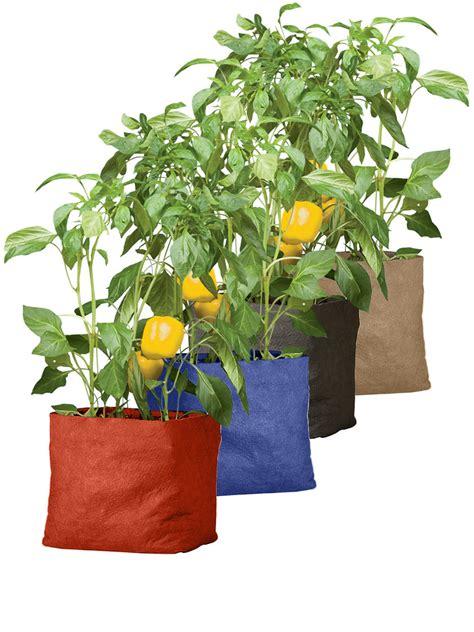 coltivare ortaggi in vaso l orto in vaso 10 dritte per coltivare ortaggi ovunque