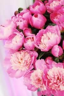 pink peonies pink peonies chic pink pinterest