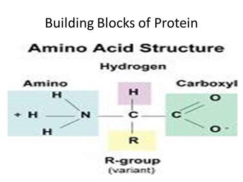 protein building blocks bch 282 dr saba abdi ppt
