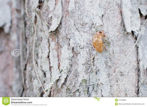 bug tree unlimited bug skin on tree and wood background stock photo image