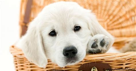 places to buy puppies places to buy a or puppy