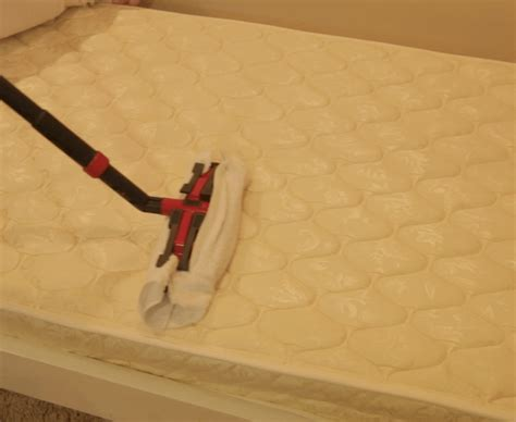 killing bed bugs with steam killing bed bugs using steam bed furniture decoration