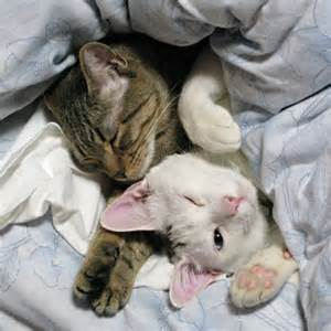 kitties cuddled up in bed