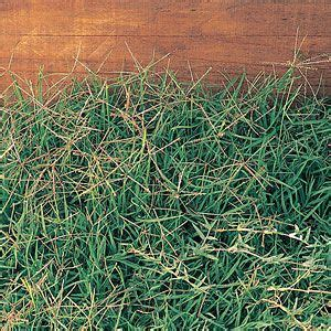 Landscape Fabric To Kill Grass Landscape Fabric And Bermudas On