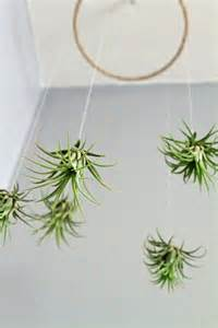 air plants air plant mobile minimalistic living art lifestyle decor pinterest plants mobiles and art