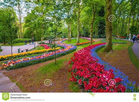 ci di fiori in olanda percorsi variopinti dei fiori parco di keukenhof lisse