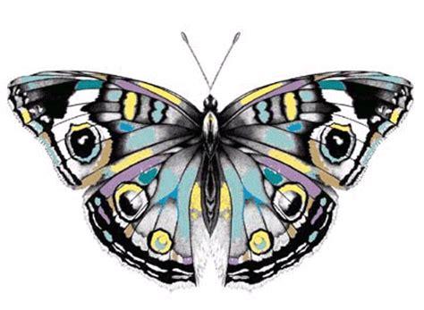 imagenes efecto mariposa el efecto mariposa taringa