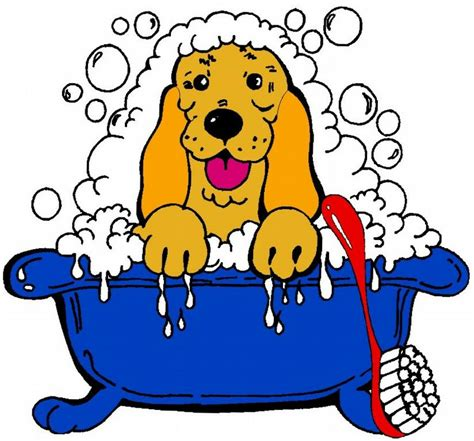 groomers in my area grooming in my area breed dogs spinningpetsyarn