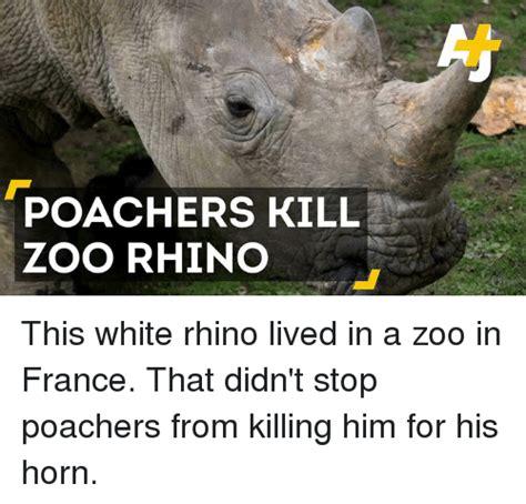 Rhino Memes - funny horns memes of 2017 on me me horn