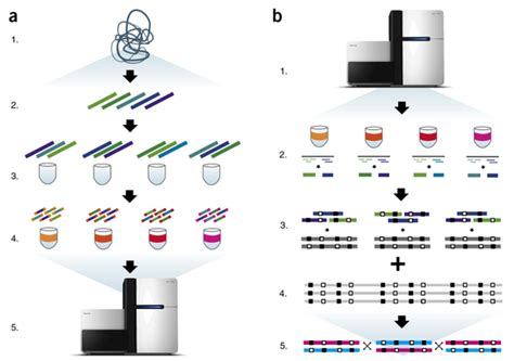 illumina sequencing protocol moleculo technology is available as truseq synthetic