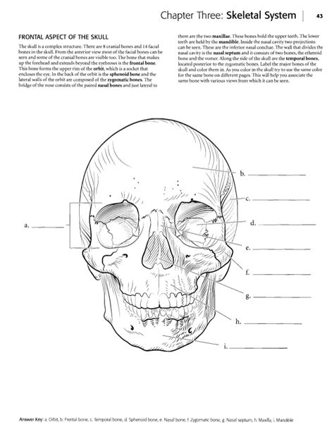 Anatomy Coloring Book Chapter 10 Blood Answers Free