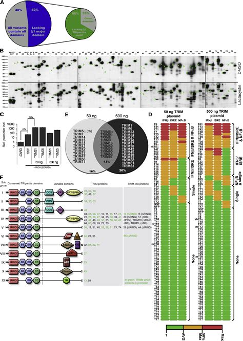 pattern recognition receptors ncbi the e3 ligase trim family of proteins regulates signaling