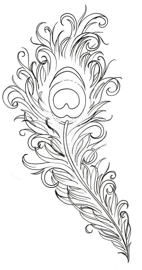 tattoo feather sketch peacock feather drawing peacock feather tattoo by