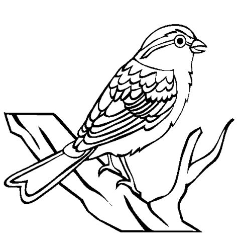 coloring page of house sparrow sparrow coloring page animals town animals color sheet