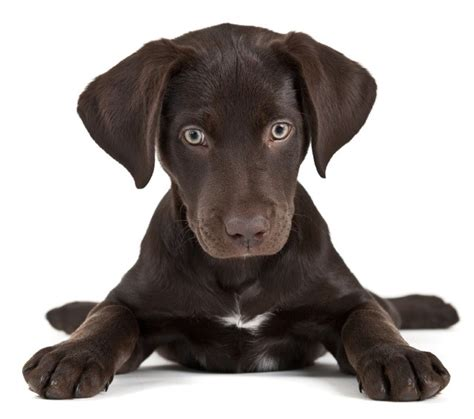 how to potty a puppy in the winter common puppy potty mistakes the how to