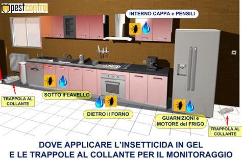 blatte in casa come eliminarle solfac gel scarafaggi come eliminarli definitivamente