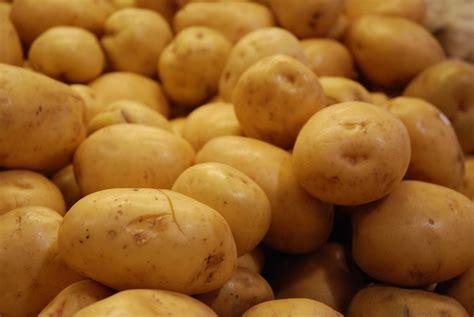 who is a potato mashed potato recipe