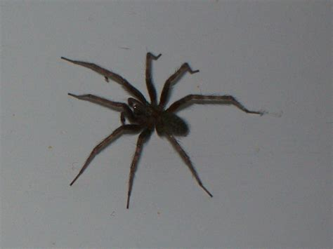 spider in bathroom more spider wildlife in my bathroom ratcreature