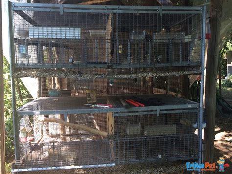 gabbie per calopsite vendita gabbie per pappagalli o piccoli roditori in vendita a