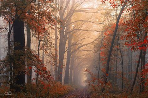 by janek sedlar photography pinterest bei 223 en gedanken viver paisagens rosemary millette