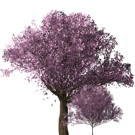 cherry bloosom tree free illustration cherry blossom tree cherry blossom