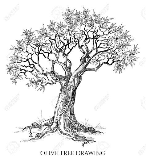 olive tree tattoo pin by kouvalainen on puu maalaus olive tree