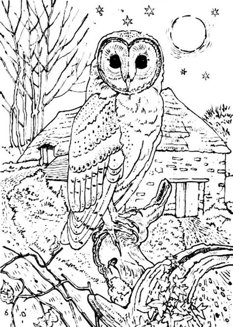 realistic owl coloring page barn owl coloring pages print kleurplaat pinterest