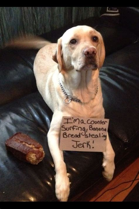 can dogs eat bread can dogs eat bread which bread is toxic for dogs
