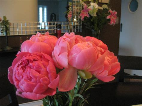 peonies season maddesigns it s peonies season