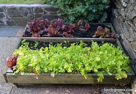 Lettuce Planters by Edible Gardening In A Greenhouse Container Garden