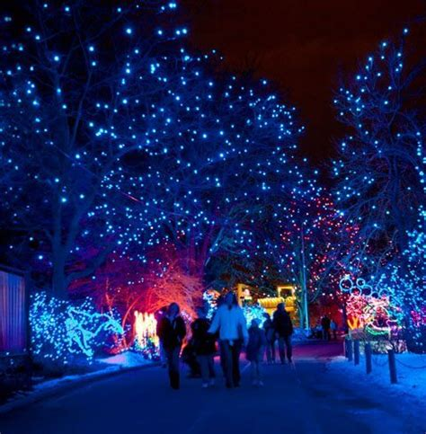 zoo lights denver co denver winter events festivals 2016 the denver ear