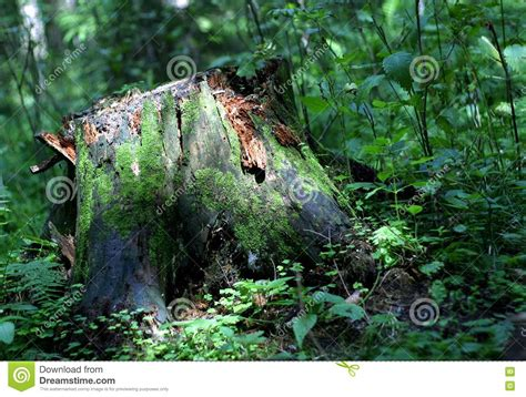 stump stock photo image  moss grass tree wood stump