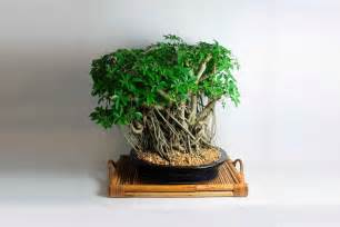 Kids Bathroom Accesories - product of the week bonsai trees