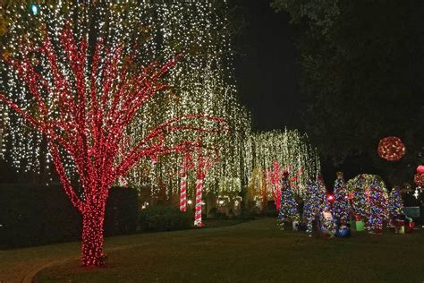 most impressive 3 d chistmas display plants for dallas your source for the best landscape plant information for the dallas ft