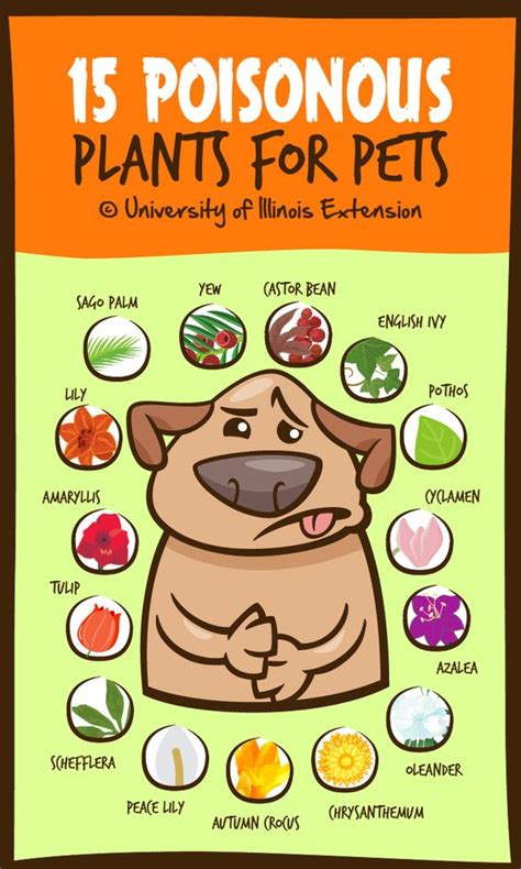 what plants are poisonous to dogs this pet s guide to poisonous plants will keep your fur