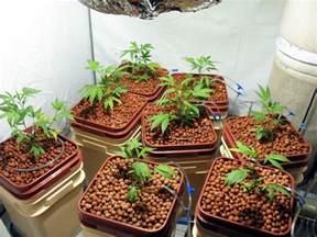 marijuana grow lights w conversion bulbs