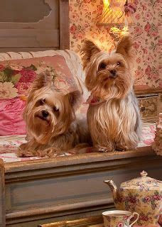 Precious Pets Cottage by Yorkies On Yorkie Yorkies And