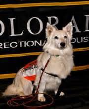colorado prison dogs cci colorado cell dogs prison trained program coloradocelldogs