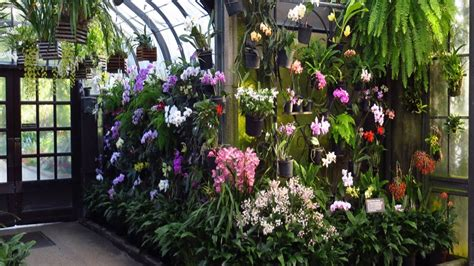 orchid house longwood gardens