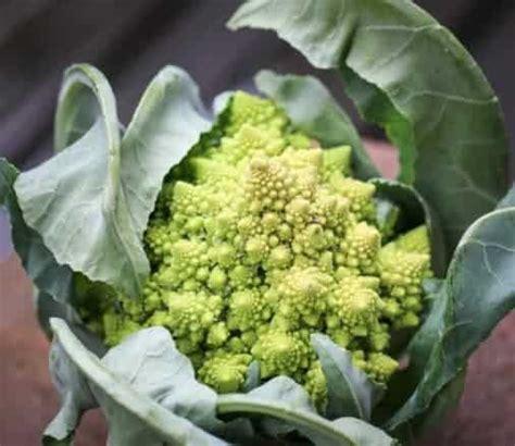 Penjual Bibit Daun Bawang jual benih bibit tanaman sayuran murah lengkap bibit