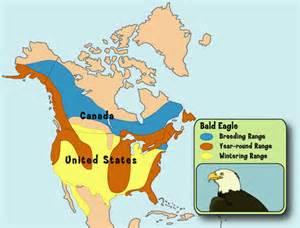headquarters bald eagle adventure