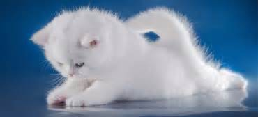 bienvenue 224 votre chaton catsan