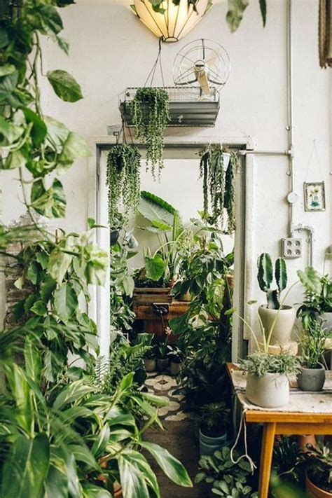 jungle home decor 1465 best images about in my home on pinterest joss and