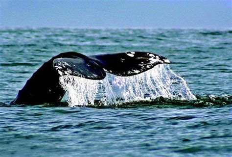 the top 10 places to go whale watching on the oregon coast