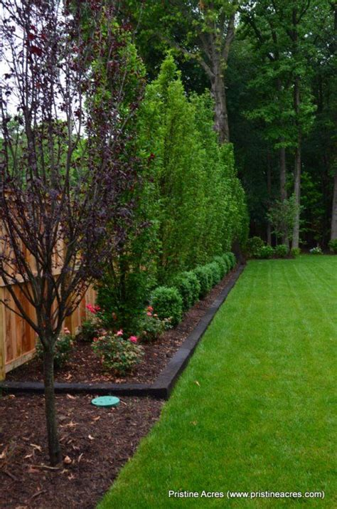 Backyard Ideas Trees Best Landscaping Along Fence Ideas On