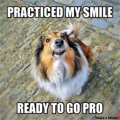 Dog Teeth Meme - smile dog meme sheltie smile creepy teeth marie
